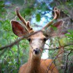 Colorado Senate Passes Bipartisan Legislation to Protect Wildlife Corridors