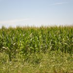 NCGA Sees Benefits from Ethanol for Fuel Legislation