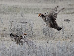 National Audubon Society (Prowers County) nets $317K RESTORE Colorado grant for Habitat Improvement